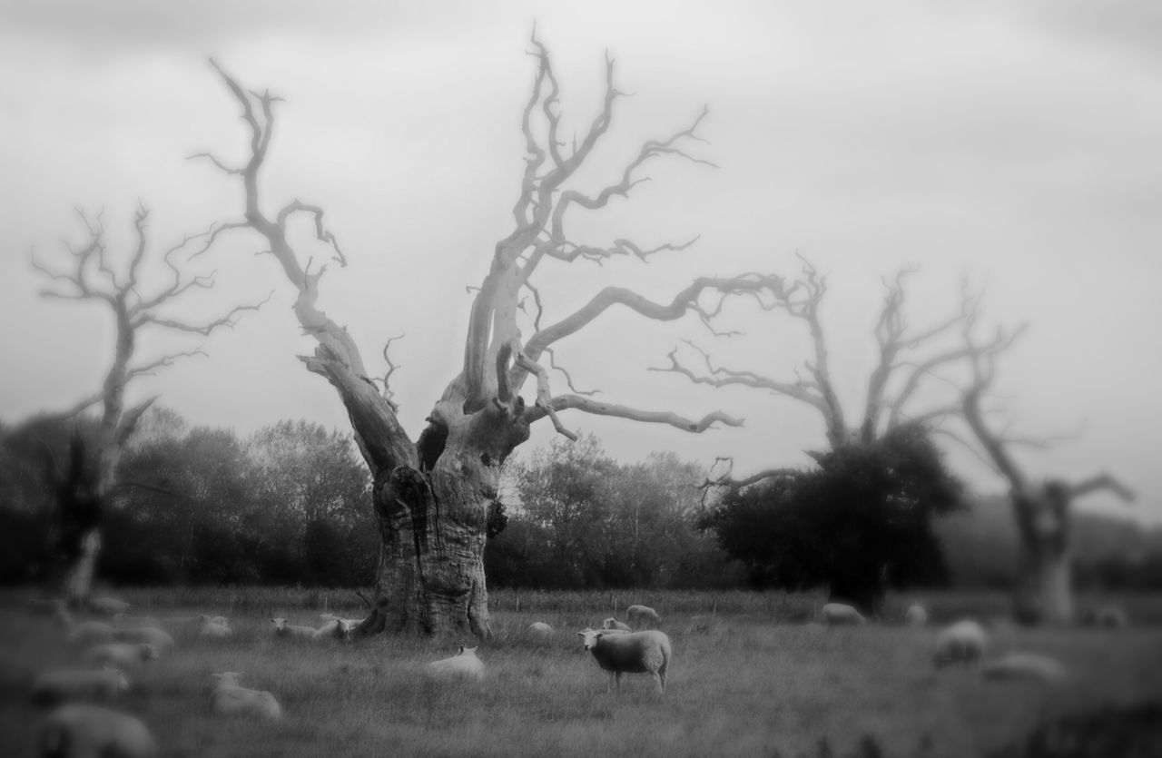 tree, nature, animal themes, landscape, grass, outdoors, day, field, bare tree, no people, growth, tranquility, plant, one animal, domestic animals, beauty in nature, mammal, sky, branch