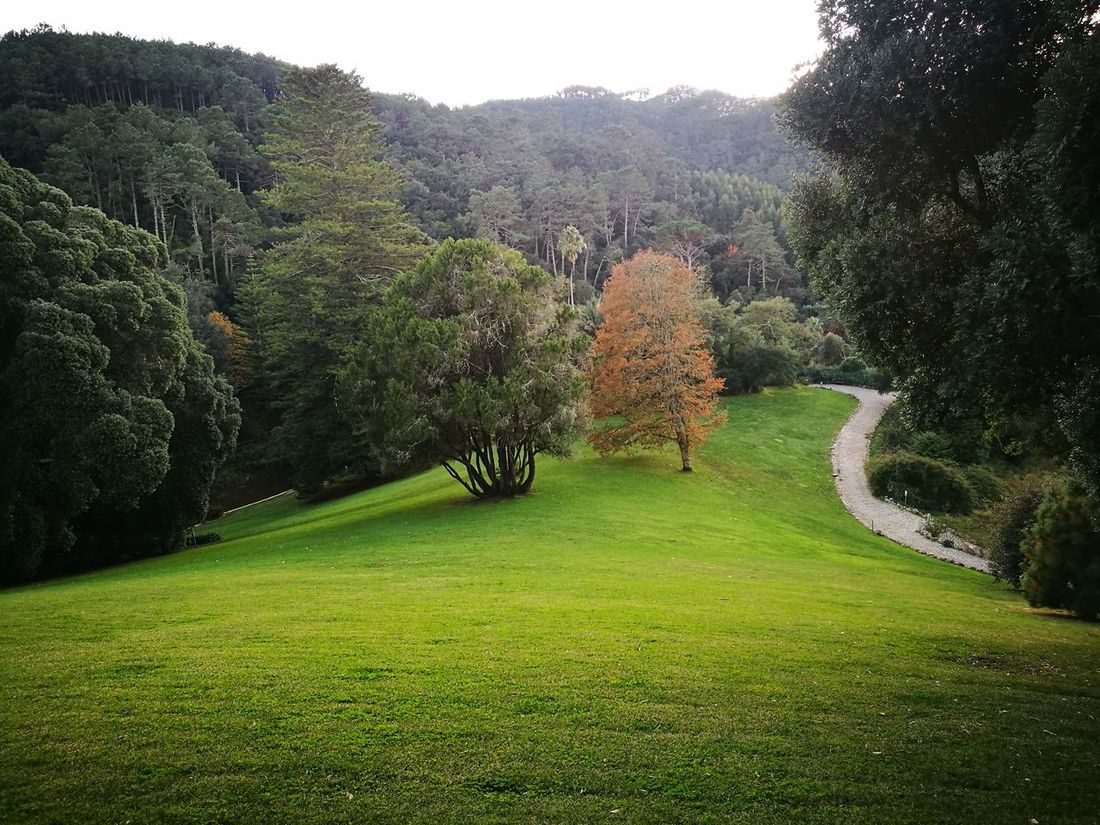 Green Color Beauty In Nature Sintra (Portugal) Sintra, Palacio De Monserrate