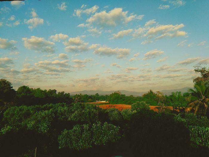 ยามเช้า Tree Nature Sunset Sky Cloud - Sky Beauty In Nature Plant Environmental Conservation Scenics Social Issues Landscape No People Outdoors Treetop Day