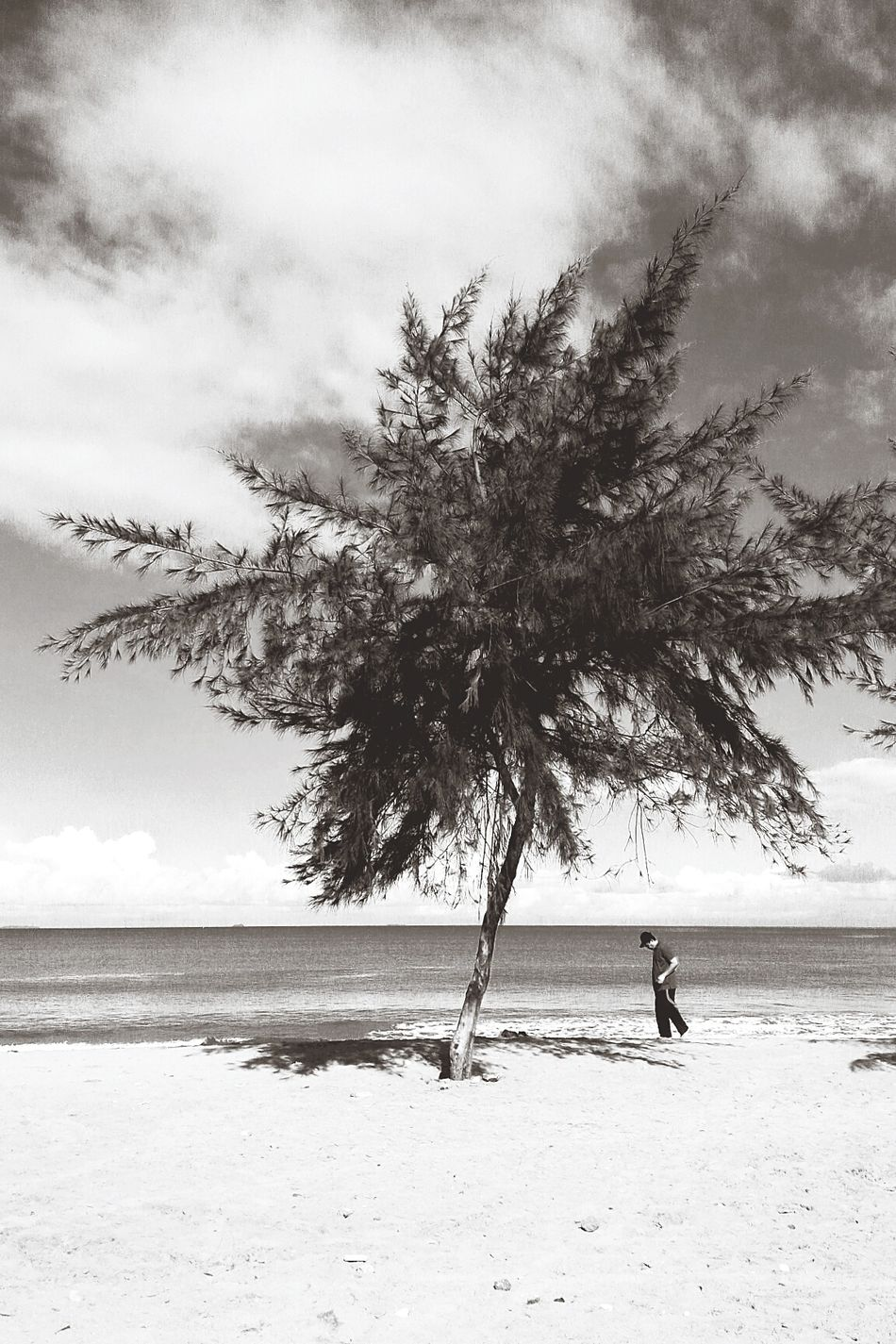 Beach Tree Outdoors One Man Only Blackandwhite Photography INDONESIA Sky