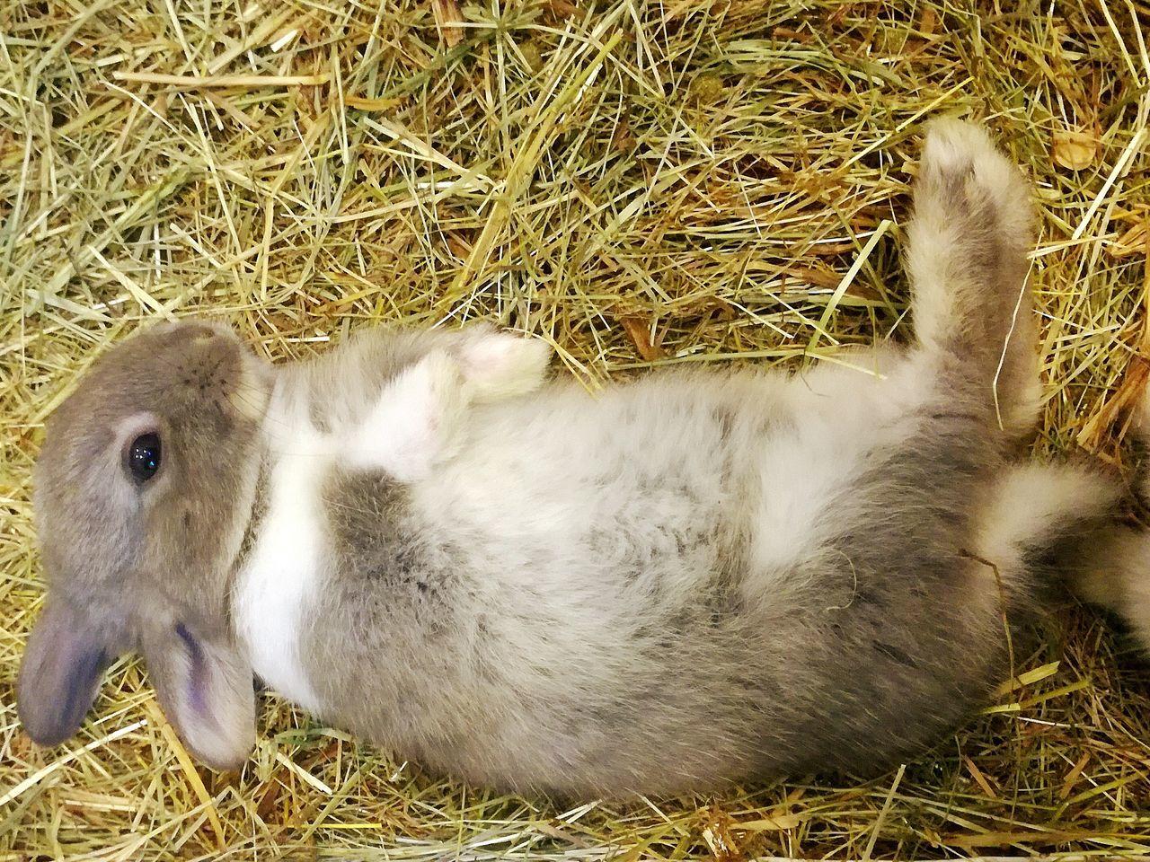One Animal Domestic Animals Rabbit 🐇 Rabbit ❤️ Rabbit - Animal
