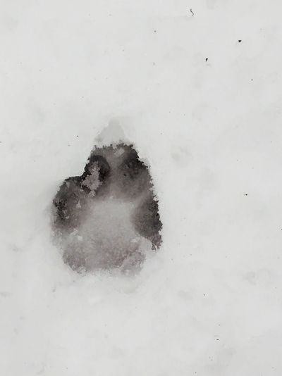 Snow Dog FootPrint Walking The Dog EyeEm Best Shots Fairphone Swaanfotografie Close-up No People Day Outdoors