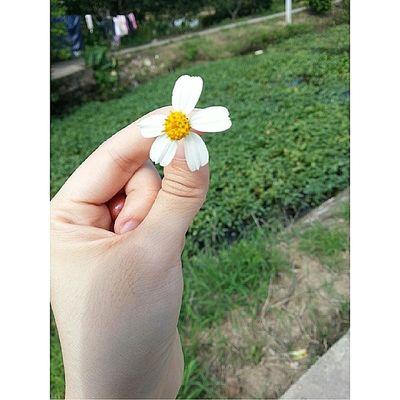 @wonder9x hỡi em, em đẹp như một bông Flowers xuyến chi :*