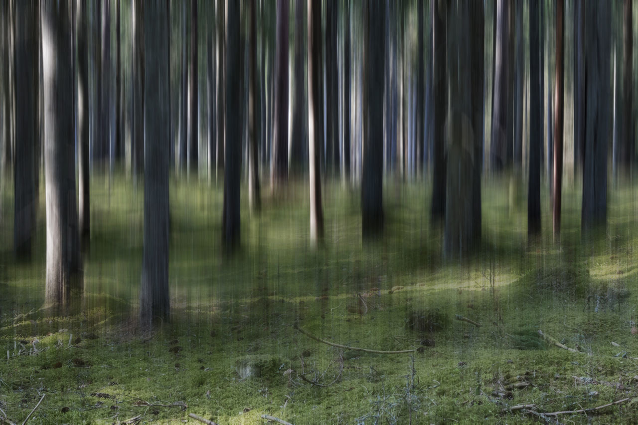 Abstract forest landscape - Abstract Abstract Art Abstract Nature Abstractart Artistic Beauty In Nature Day Drastic Edit Edit Exceptional Photographs EyeEm Best Edits First Eyeem Photo Forest Grass Green Color Growth Hello World Landscape Nature No People Outdoors Scenics Tranquility Tree Tree Trunk