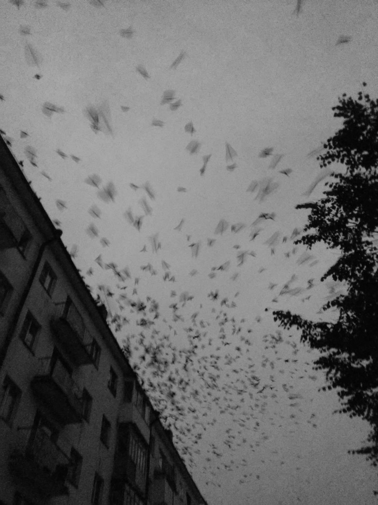 Animal Themes Animals In The Wild Architecture Bird Black And White Blackandwhite Flock Of Birds Flying Low Angle View No People Russia Sky Velikiy Novgorod