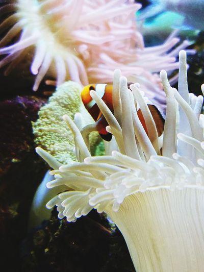 Underwater Sea Life Sea Clown Fish Water Close-up Nature Fish first eyeem photo