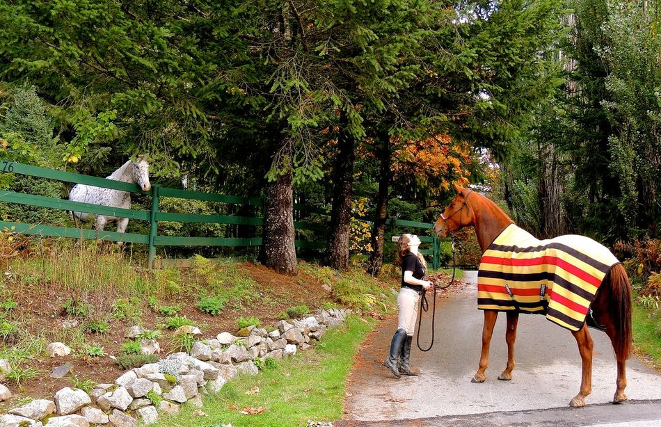 Hello Encounters Horses Laneway One Person Outdoors Trees Interactions