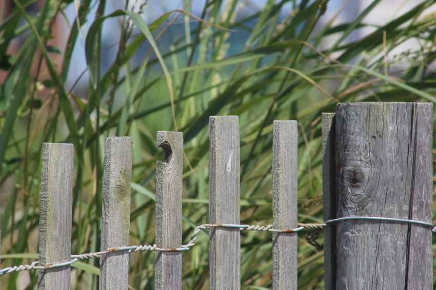 Atlantic City! Beach Life Beach Photography Beach Time Hot Day New Jersey Shore Atlantic City Boardwalk Beach Fence Close-up Day Field Grass Green Color Nature No People Outdoors Protection Safety Sandy Beach Summer Wood - Material Wooden Post