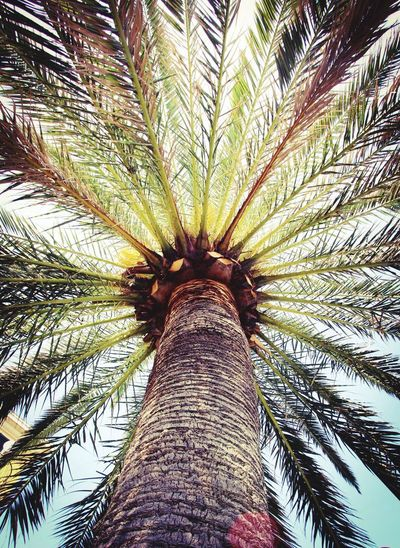 Palm Tree Tree Low Angle View Palm Leaf Tree Trunk Nature Sky Growth Full Frame Beauty In Nature Adventure Day Tranquility No People Tree Area Outdoors Clear Sky Scenics Plant Part Close-up Italia