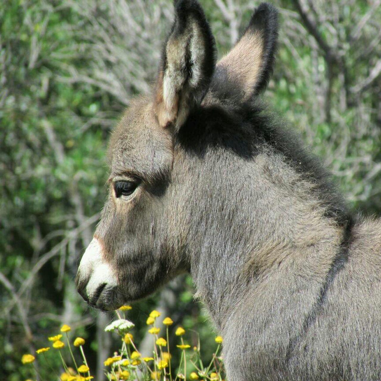 Beautiful stock photos of donkey, Albisola Superiore, Animal, Animal Head, Animal Themes