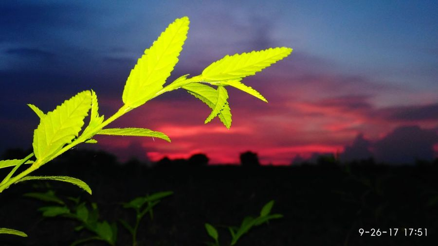 Green Leaves Growth Evening Time Landscape Beauty In Nature Background Orange Environment
