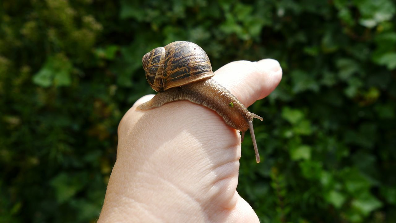 After rain , another one Nature_collection Animals Snail Snail With Shell Snail On My Hand Risk And Fun After Rain Eyem Gallery Nature Antennas EyeEm Gallery Crawling Crawling On My Hand Slimy Slimy Snails Slimy Snail On My Hand Break The Mold