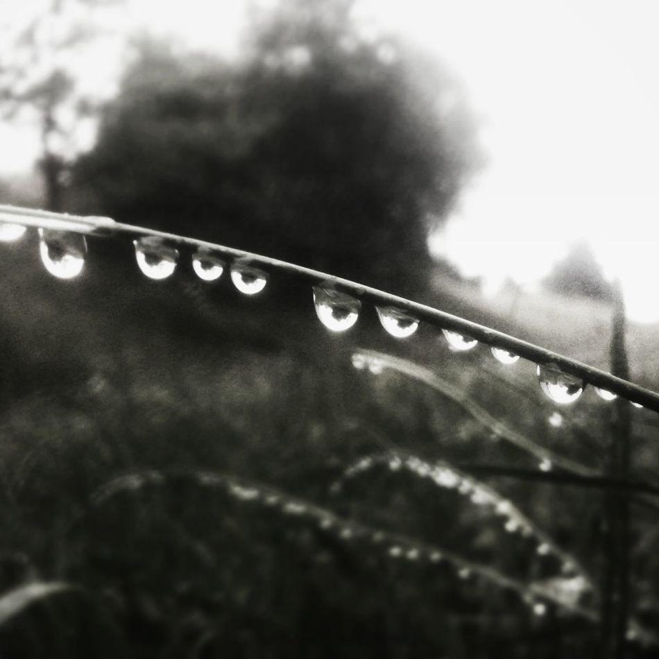 Caminito de gotas Water Reflections Wet Nature Road Of Drops