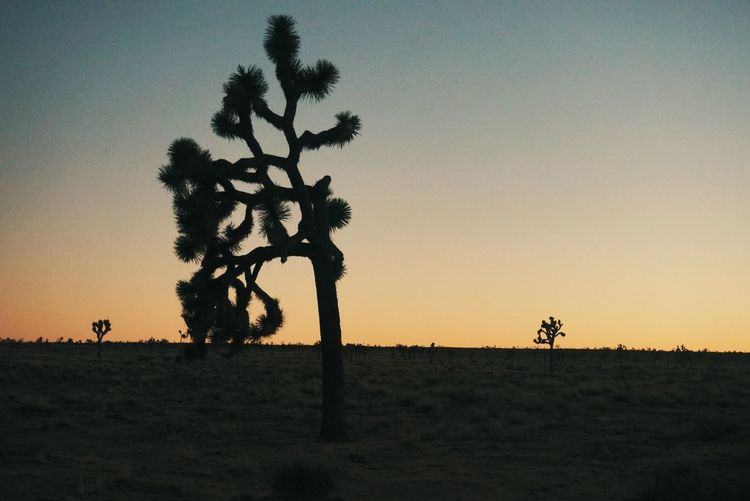 Bare Tree Beauty In Nature Clear Sky Copy Space Desert Field Growth Horizon Over Land Joshua Tree Joshua Tree National Park Jtree Landscape Nature Non-urban Scene Orange Color Rural Scene Scenics Silhouette Sky Solitude Sunset Tranquil Scene Tranquility Tree