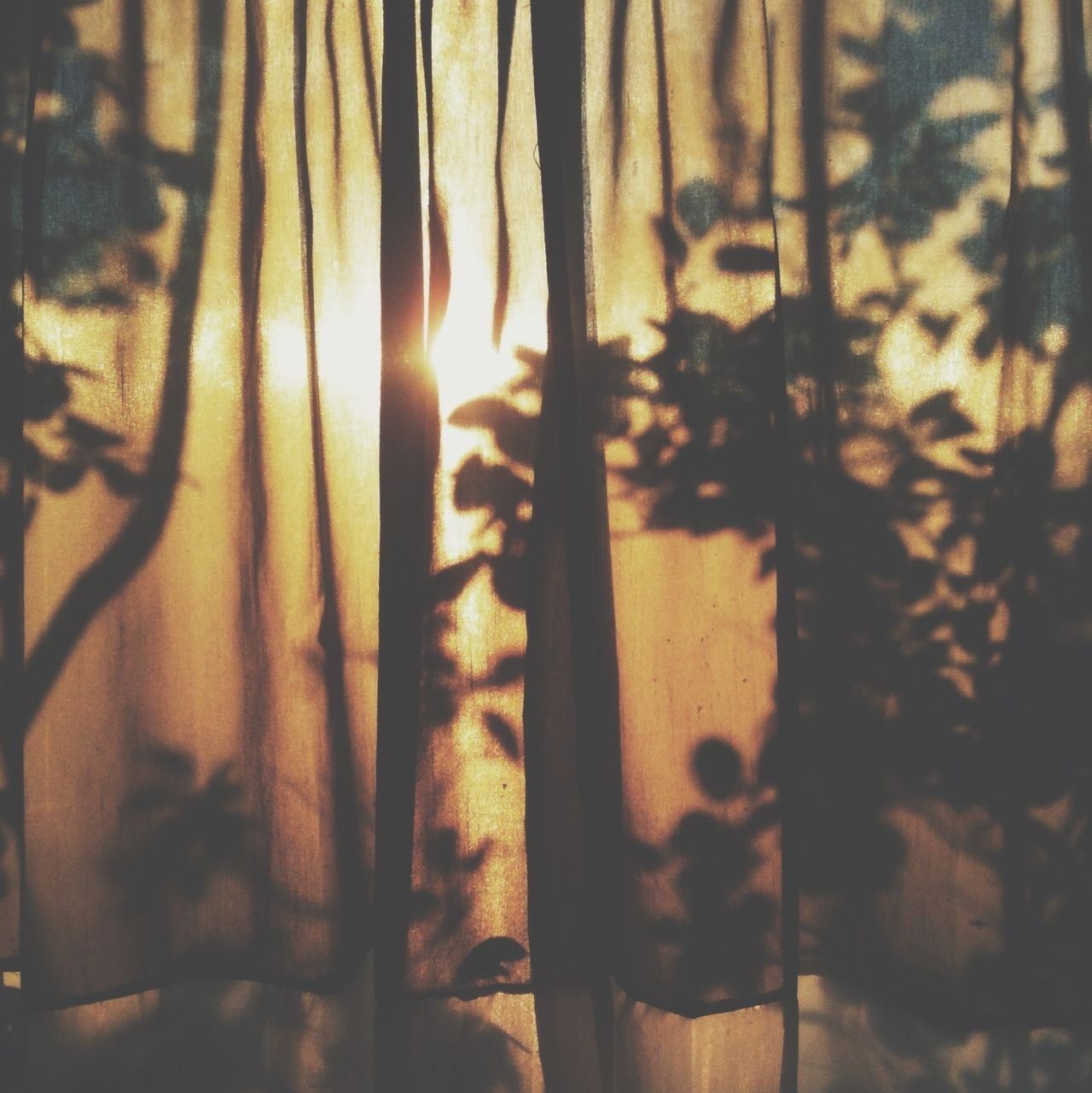 Beautiful stock photos of good morning, Beauty In Nature, Branch, Close-Up, Curtain