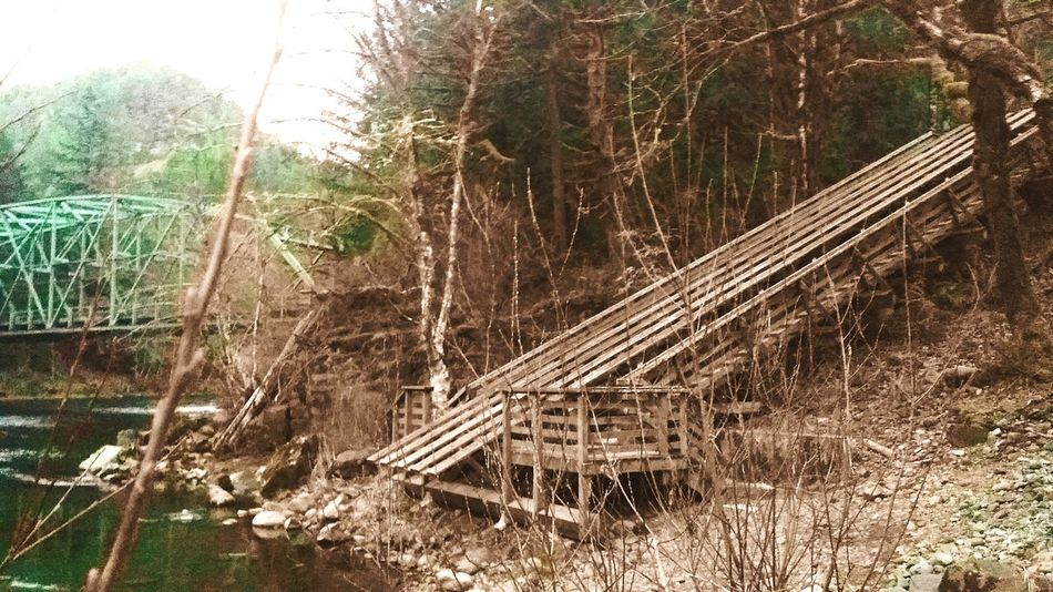 Riverside Ramp Who's Coming With Me Just Chillin' Clackamas River Mt Hood In The Forest