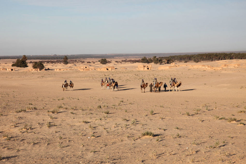 Beautiful stock photos of africa, Arid Climate, Camel, Clear Sky, Copy Space