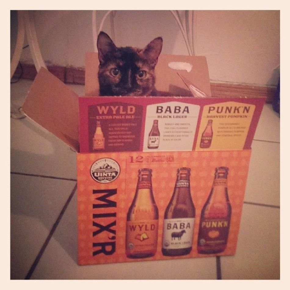 Silly kitty, that's not where you belong. Beercat Instacat Catsofinstagram