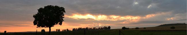 Apricot Tree Landscape Panoramic Scenics Sunrise Tranquil Scene Tranquility Tree