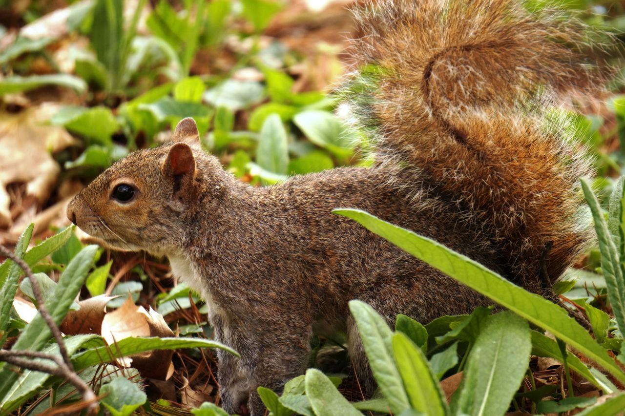 Squirrel One Animal Animals In The Wild Outdoors Natura Scoiattolo Parco Castello Nature
