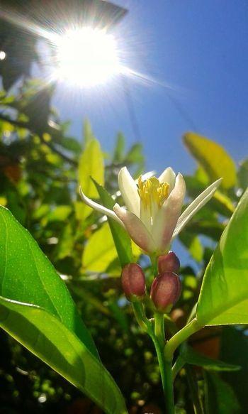 flores Flower Fragility Growth