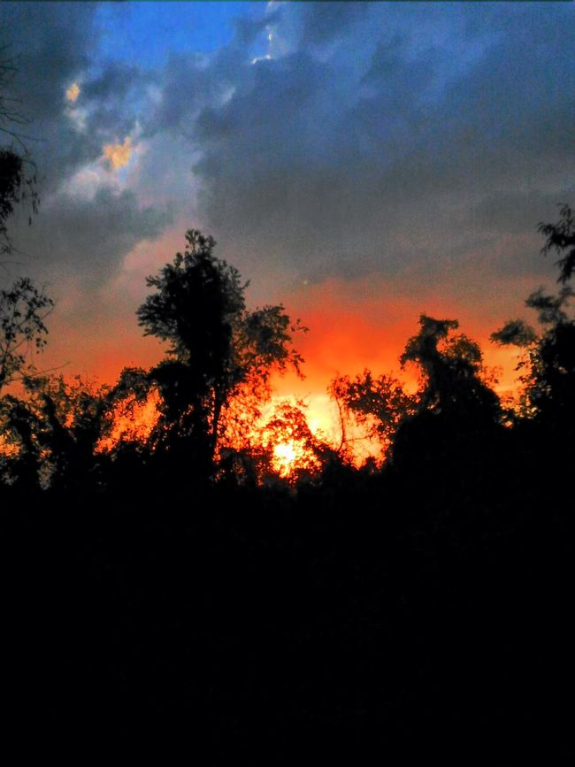 Tonight's sky... Silhouette Sunset Tranquil Scene Tree Beauty In Nature Cloud - Sky Orange Color Non-urban Scene Atmosphere No Filter, No Edit, Just Photography Sawonmyadventure Nature Photography Sunsetporn Sunset And Clouds  Sunsetlover Sunset_captures Dramatic Sky Onlygodcouldcreatethis