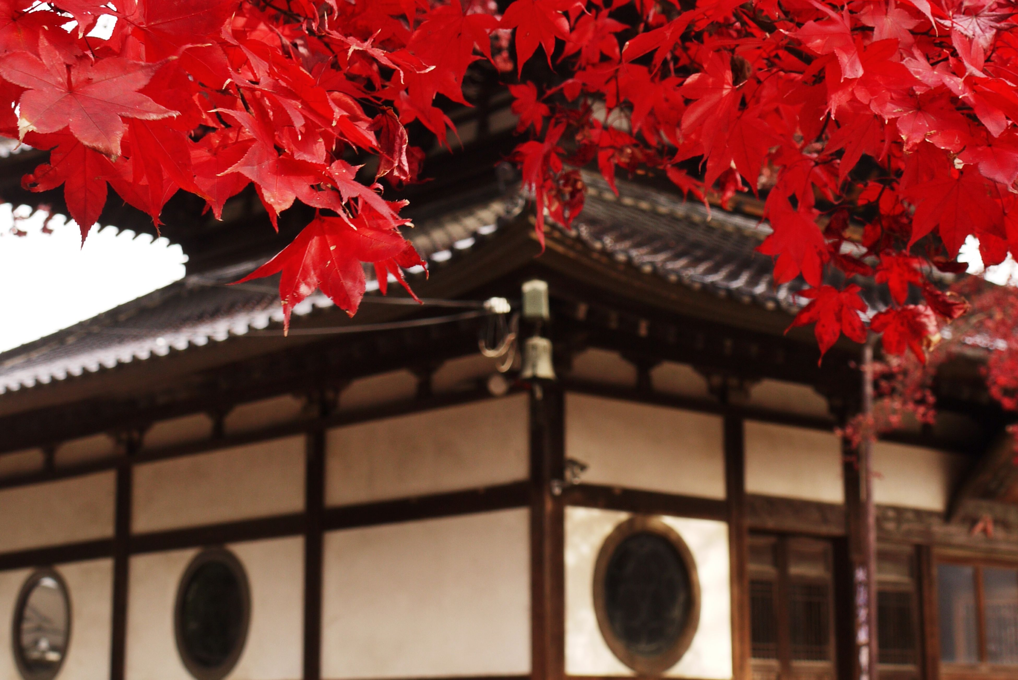 low angle view, red, hanging, decoration, built structure, architecture, religion, building exterior, spirituality, place of worship, lantern, close-up, tradition, indoors, lighting equipment, no people, ornate, day, cultures, flower
