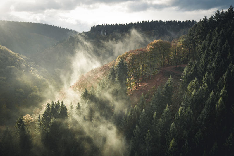 Forrest at sunset, Geierlay Suspension Bridge, Germany Autumn Autumn Colors Autumn Leaves Copy Space Footbridge German Morning Nature Sunlight Trees Trekking Beauty In Nature Fog Foggy Foggy Morning Geierlay Hunsrück Mist Nature No People Outdoors Scenics Sunset Tranquility Tree