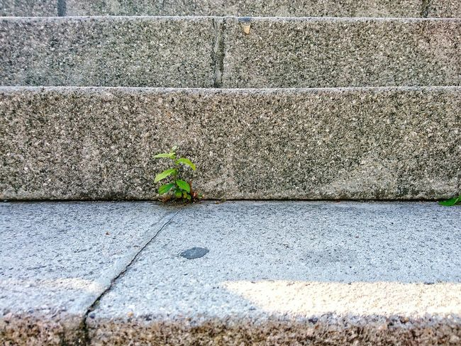 TakeoverContrast Plant Full Frame Growth Concrete Day Repetition Outdoors Growing No People Green Color Fragility Stone Material Pedestrian Walkway Footpath Nature Plant