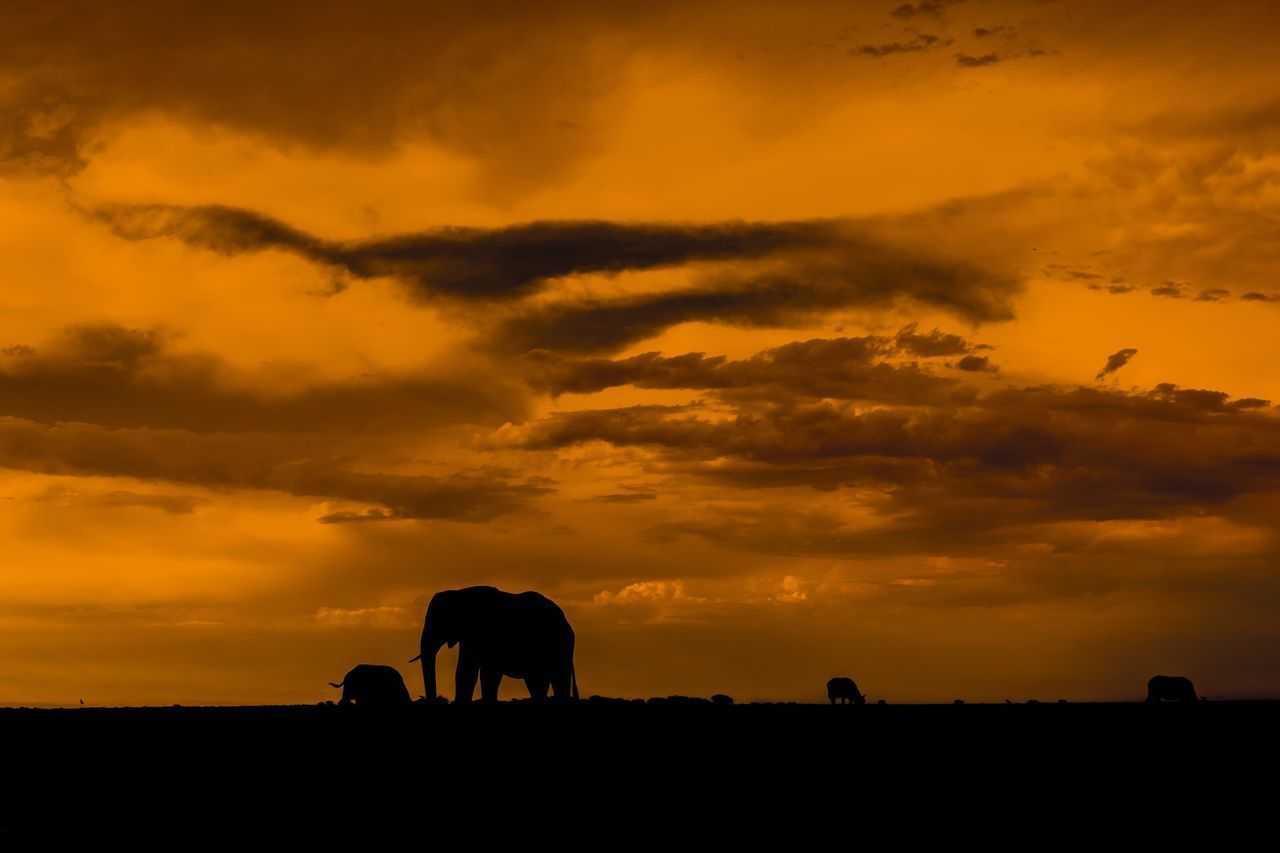 sundowner @ chobe Namibia