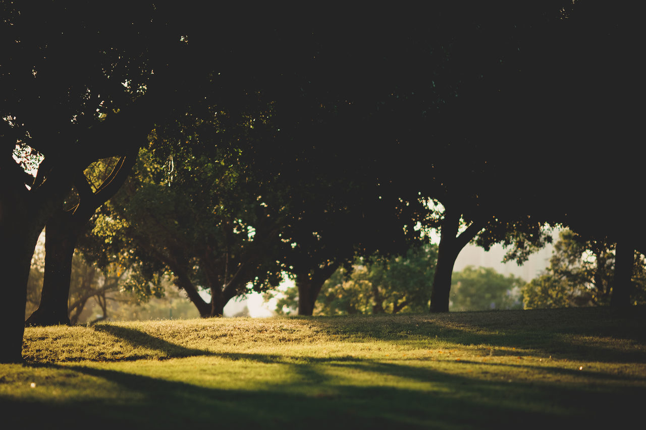 tree, nature, sunlight, no people, tranquility, growth, outdoors, beauty in nature, shadow, branch, day, sky