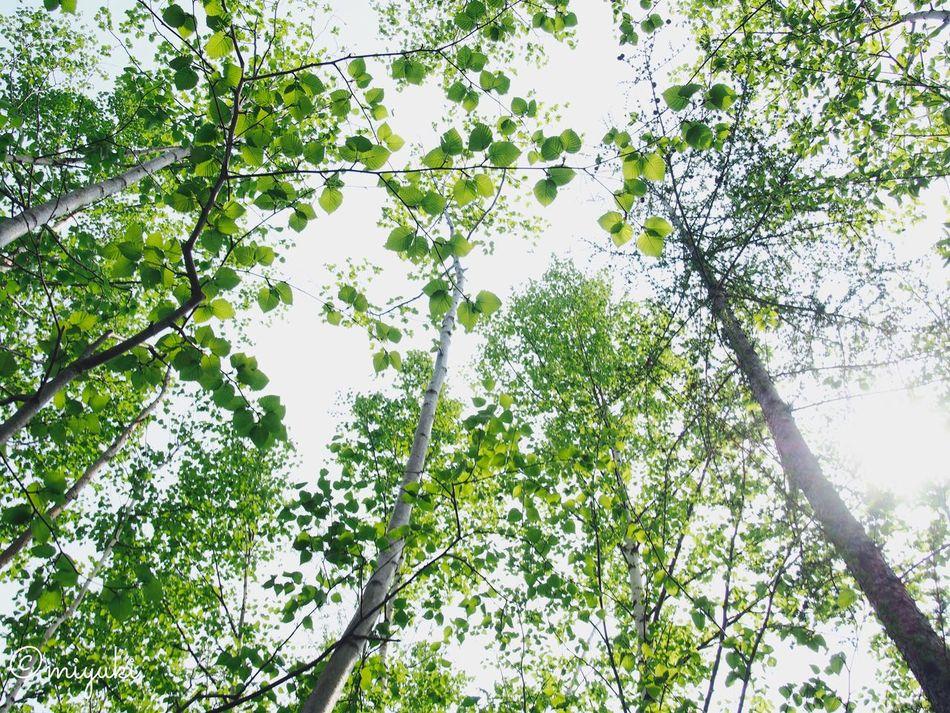 forest. Green Forest EyeEm Nature Lover EyeEm Best Shots Eye Em Nature Lover