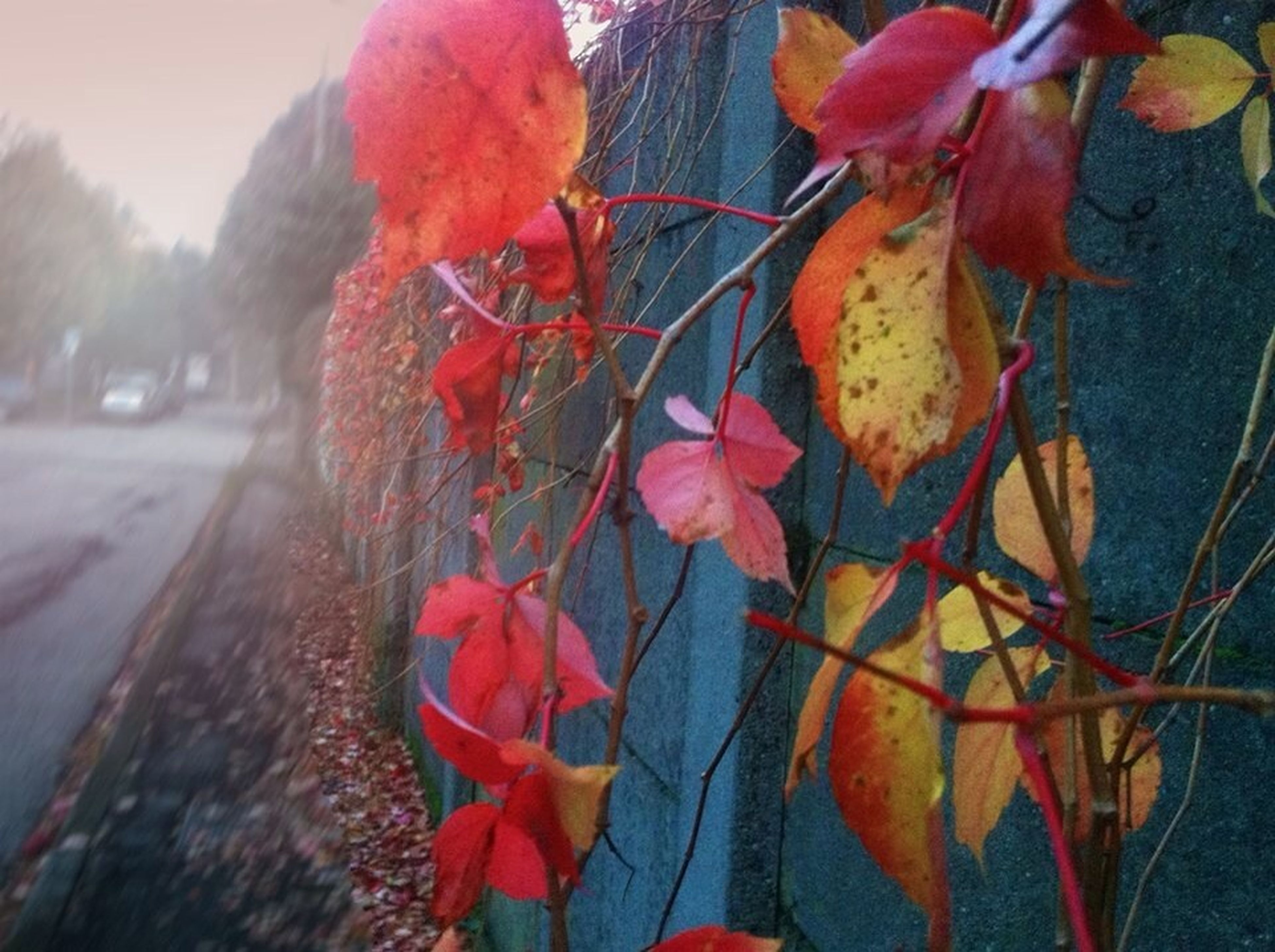 leaf, autumn, branch, red, change, orange color, season, nature, tree, focus on foreground, close-up, bird, leaves, beauty in nature, day, outdoors, growth, flower, no people, fragility