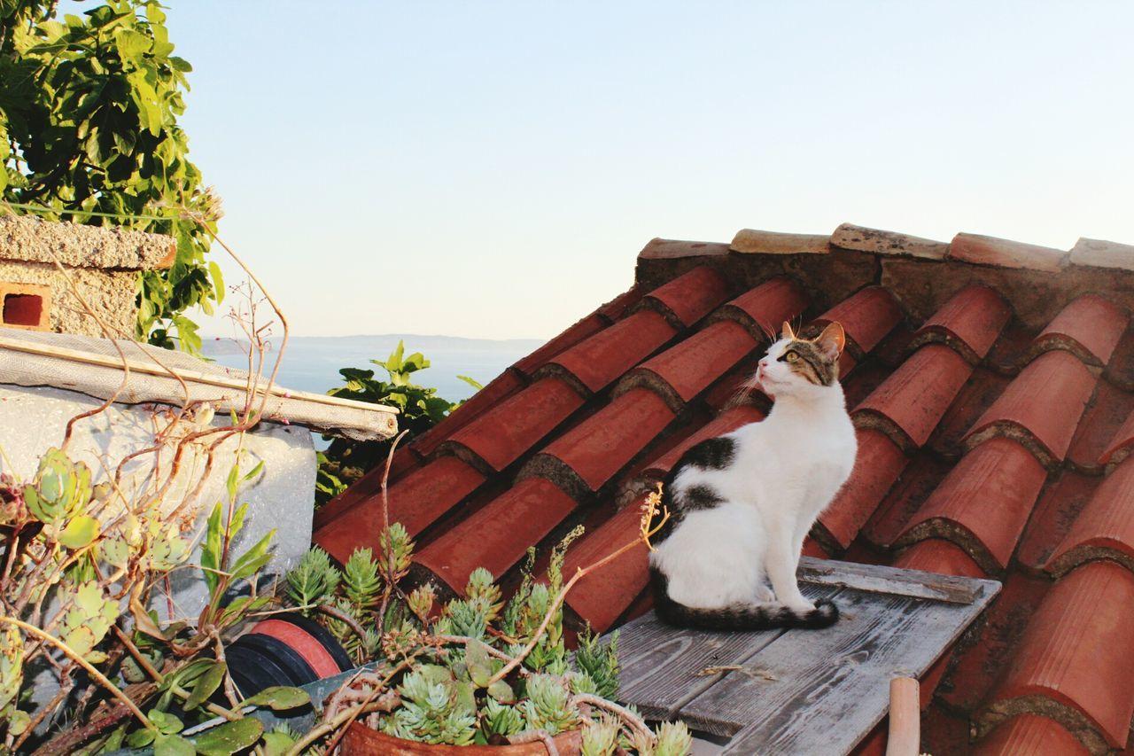Sardinia Home Canon1300d Italy❤️ Animals In The Wild Beauty In Nature Italy🇮🇹 Sulcis Domestic Animals Nebida Sea Cats Tetto Terazza VistaMare Gatto Panoramic Photography Flower