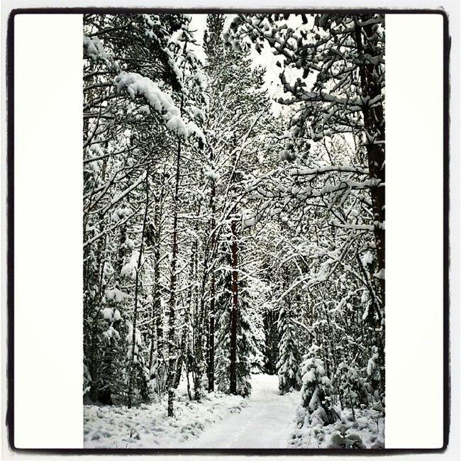 Dalarna Vinter Hjortnäs