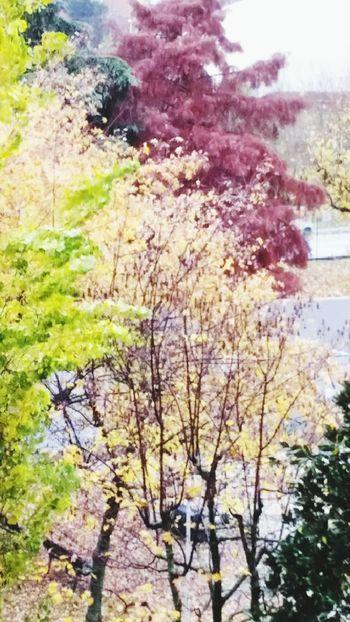 Outdoors Tree Colori D'autunno Autunno  alberi