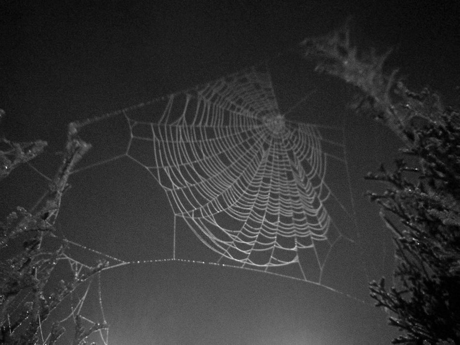 Nature Outdoors Concentric No People Black & White Illuminated Fine Art Photography Exceptional Photographs Nature Tela De Araña Spider Silk