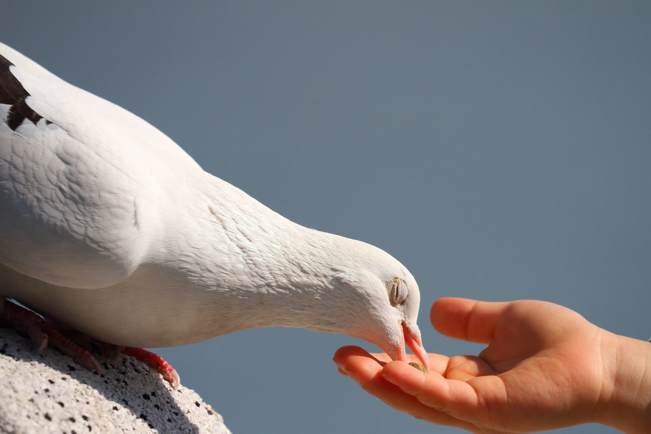 「 鳥撮り部♪ 」 ちょっと部活してきた♪(*´艸`*) Human Hand Cropped Real People Human Body Part Human Finger One Person Animal Themes Bird Leisure Activity Holding One Animal Close-up Animals In The Wild Day Outdoors Bird Photography Birds_collection Birds Of EyeEm  Pigeon EyeEm Taking Pictures EyeEm Best Shots EyeEmBestPics Taking Photos