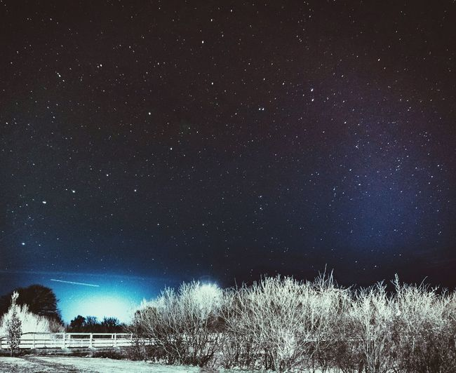 Star - Space Astronomy Night Sky Space And Astronomy Star Field Galaxy Low Angle View Space Constellation Beauty In Nature Nature Outdoors Scenics Tranquility No People Science Tree Space Exploration Milky Way Ursa Major Ursamajor Ursa Major