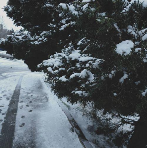 Winter EyeEm Nature Lover Wintertime Likeforlike Vscocam Snow