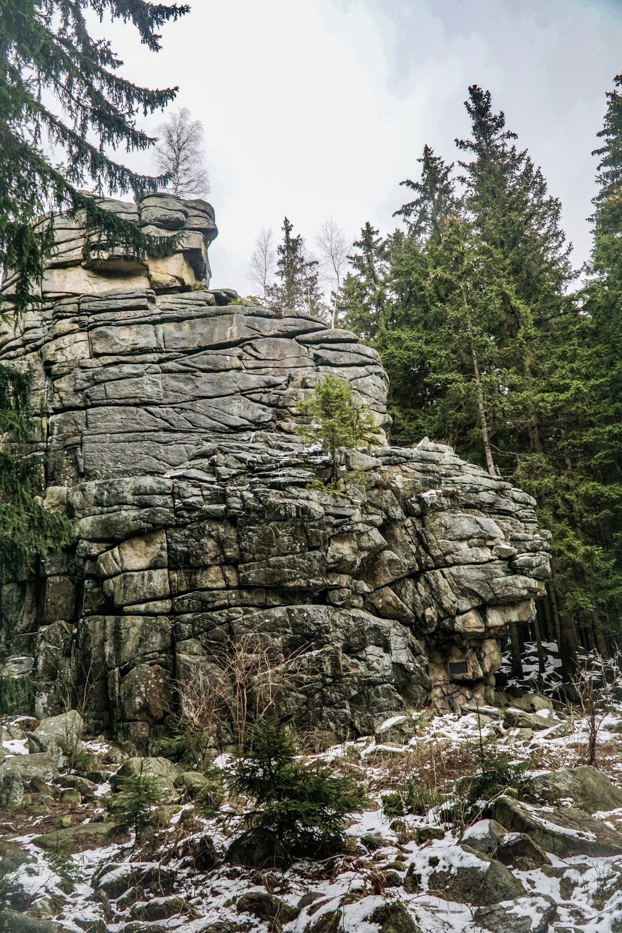 Forest Tree Rock - Object Nature Travel Ancient Place Of Worship History Landscape Travel Destinations Outdoors No People Day Sky Eco Tourism National Park Harz Beauty In Nature Snow Winter Weather Nature Cold Temperature Tree