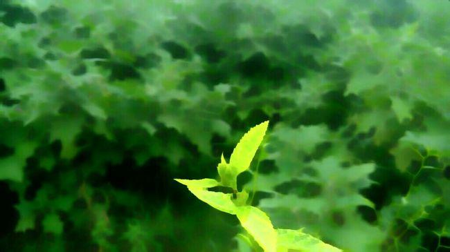 Enjoying Clicking 📷📷 Nature Travelaround Posting Pics