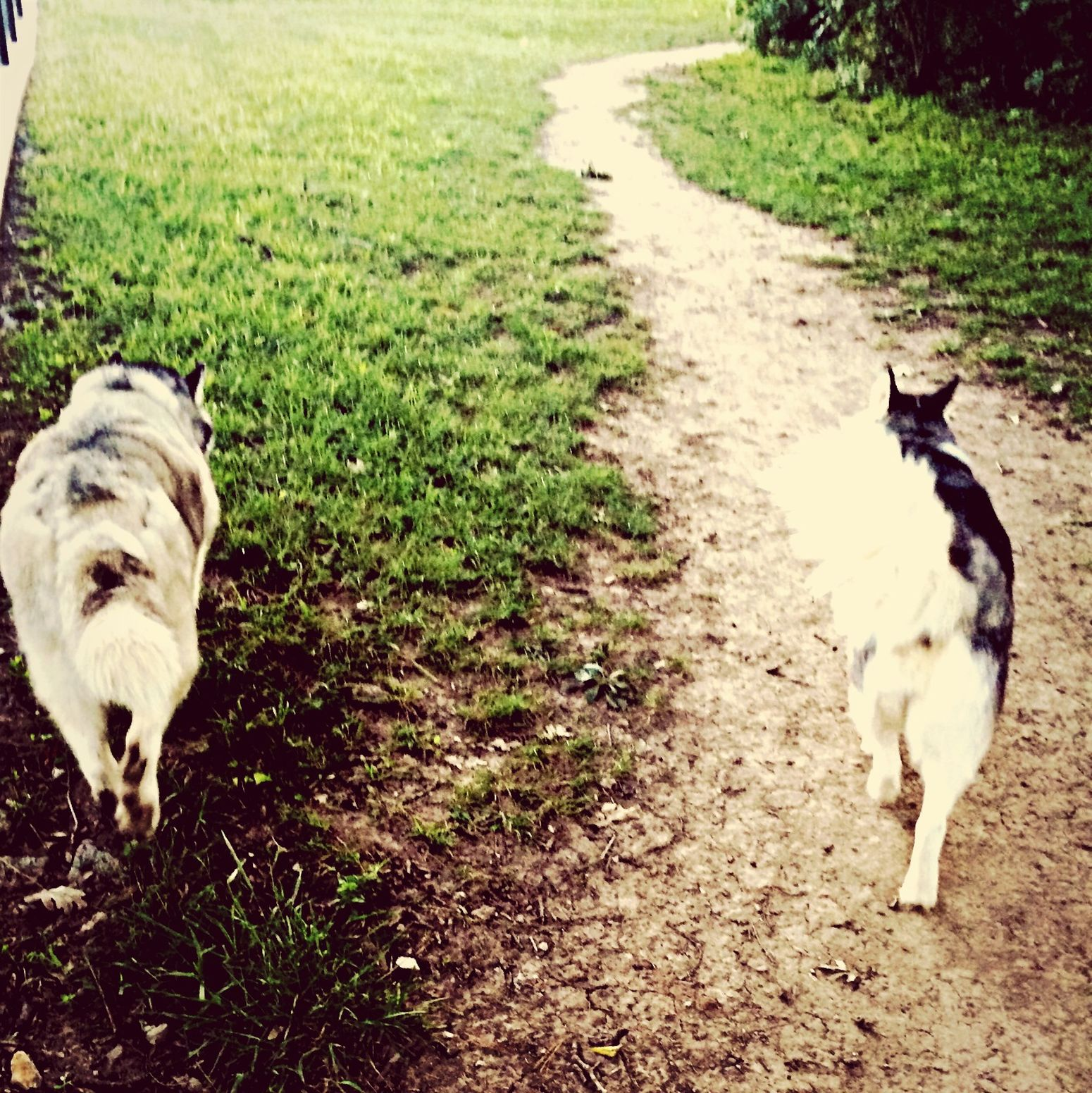 Lovelife Sisters Huskies They Sniff Bums