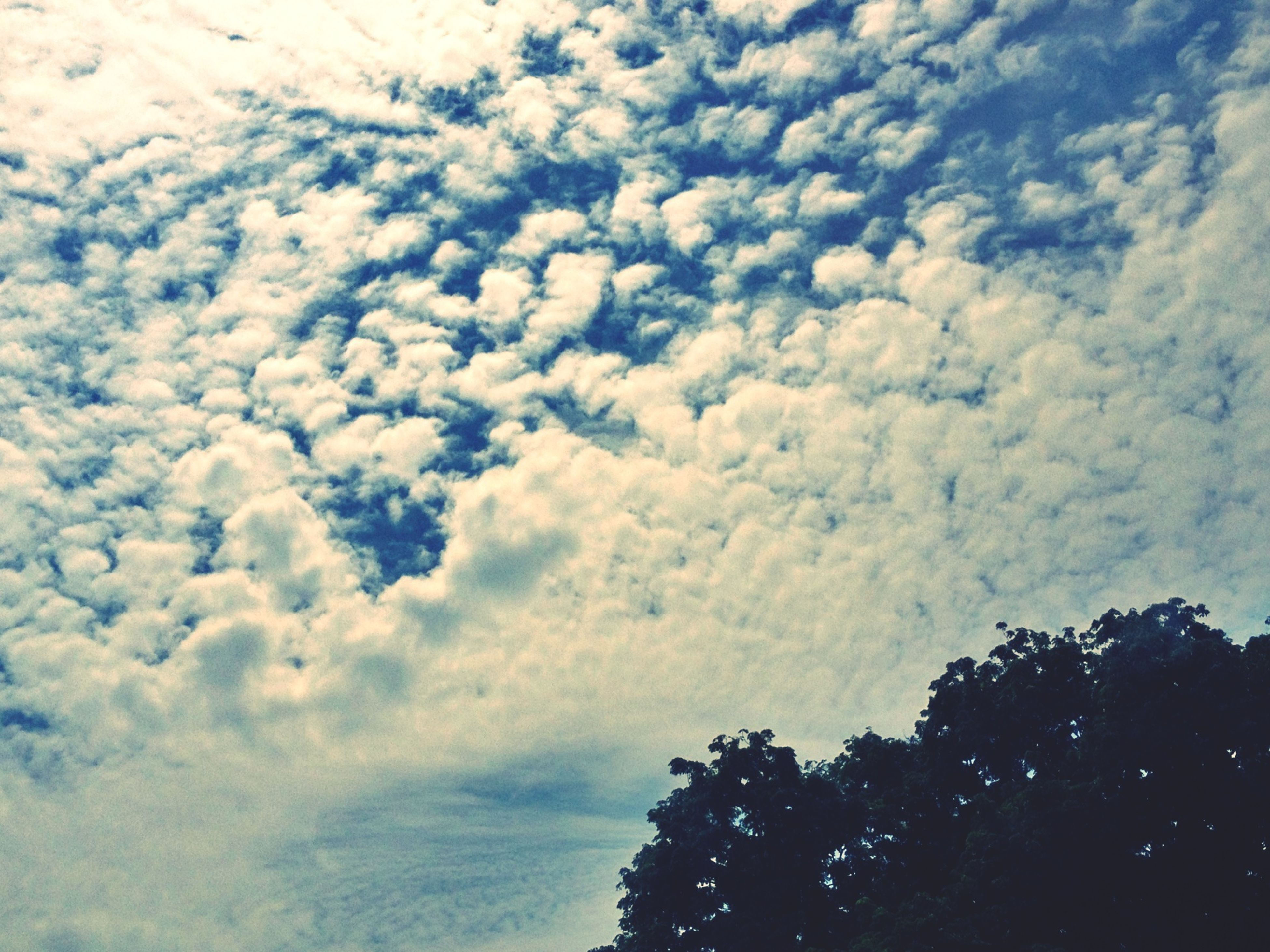 low angle view, sky, tree, cloud - sky, beauty in nature, tranquility, nature, scenics, tranquil scene, cloudy, silhouette, growth, cloud, day, outdoors, no people, idyllic, high section, white color, cloudscape