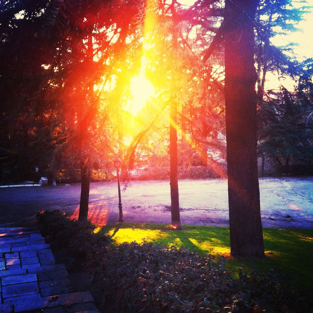 Enjoying The Sun Eye4photography Hanging Out Nature