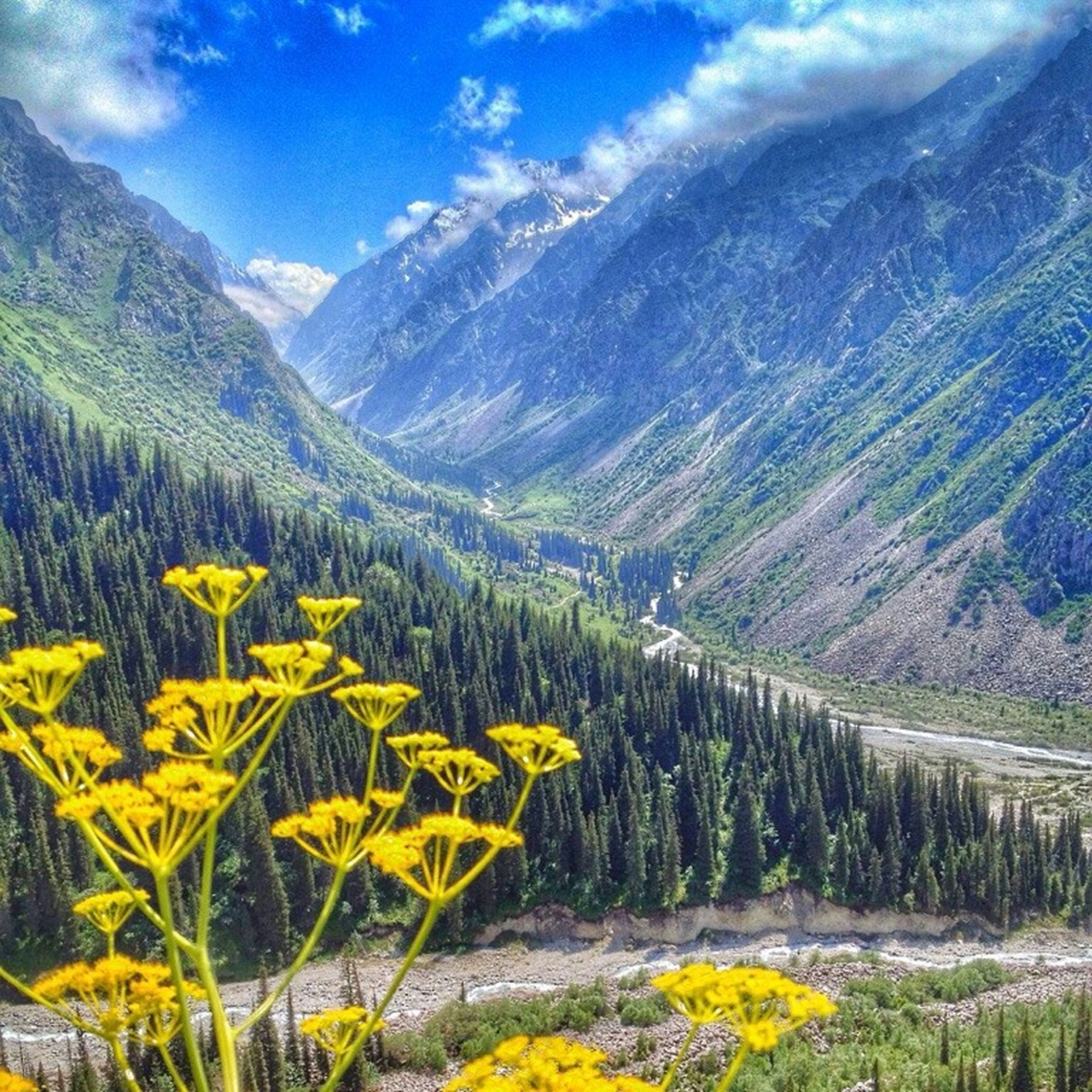 mountain, beauty in nature, tranquil scene, tranquility, flower, scenics, yellow, landscape, nature, growth, sky, mountain range, plant, tree, non-urban scene, field, cloud - sky, idyllic, day, no people