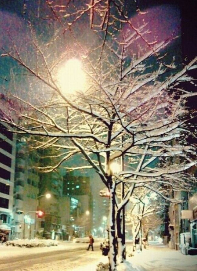 Taking Photos Enjoying Life 冬支度 Winter_collection Snow Snow Day 雪⛄ 雪景色❄ Tree_collection  It's Cold Outside