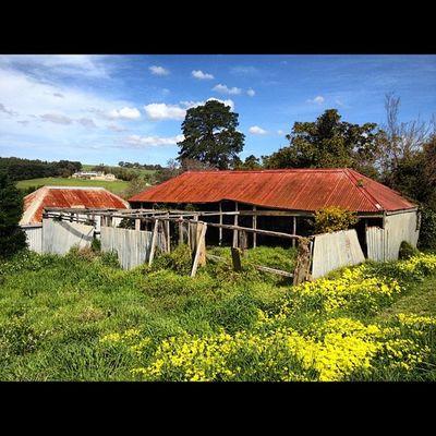 #rusty #shack_sniper #bellarine Rusty Shack_sniper Bellarine