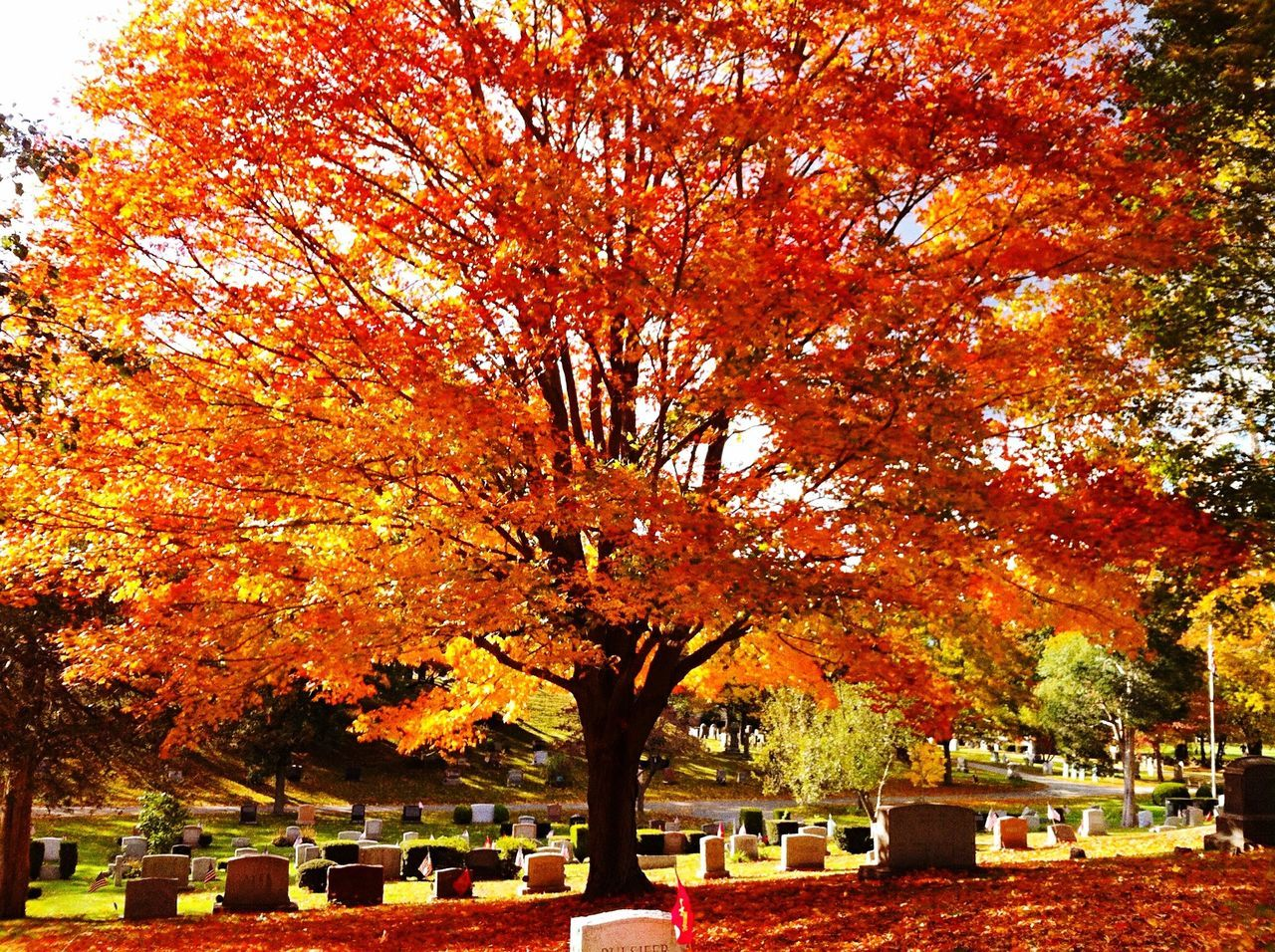 autumn, tree, tombstone, cemetery, change, leaf, graveyard, gravestone, nature, memorial, tranquility, maple tree, outdoors, day, beauty in nature, no people, tranquil scene, branch, cross, maple, sky
