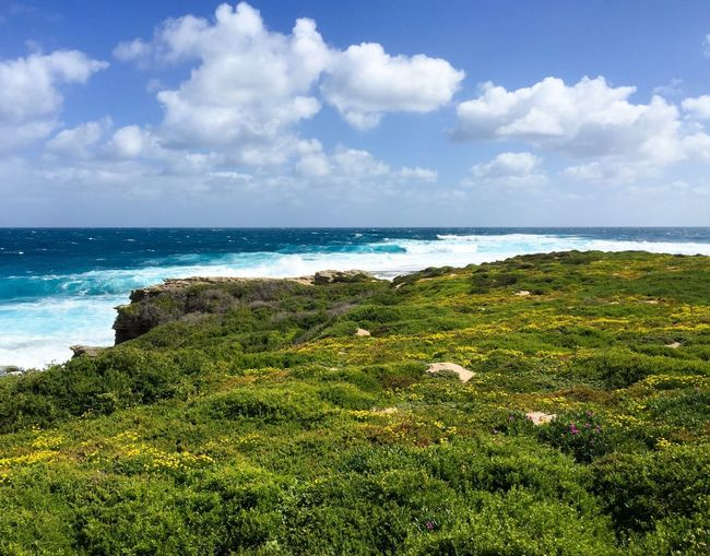 Lush dunes, cliffs and sea at Cape Vlamingh on Rottnest Island Sea Horizon Over Water Beach Nature Scenics Water Green Color Growth Beauty In Nature Tranquility Plants Dunes Cliff Wave Remote Idyllic Turquoise Rottnest Island Western Australia Seascape Travel Destinations Cape Vlamingh Indian Ocean Landscape Peaceful